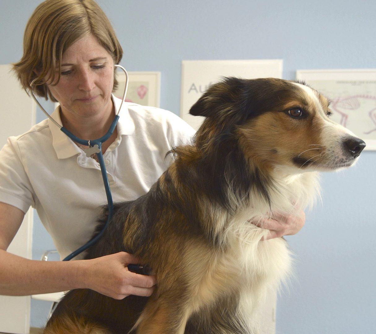 Allgemeine Tiermedizin